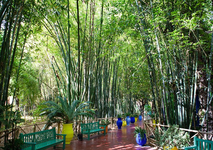 Business trip Marrakech majorelle garden
