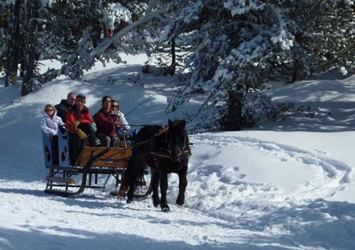 business winter day sled horse-ride