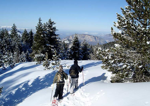 business winter day snow shoe walk